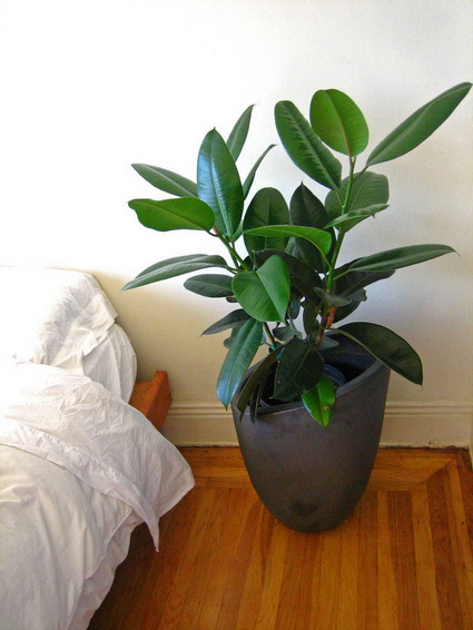 How To Using Plants Decorating Ideas For Interiors 3