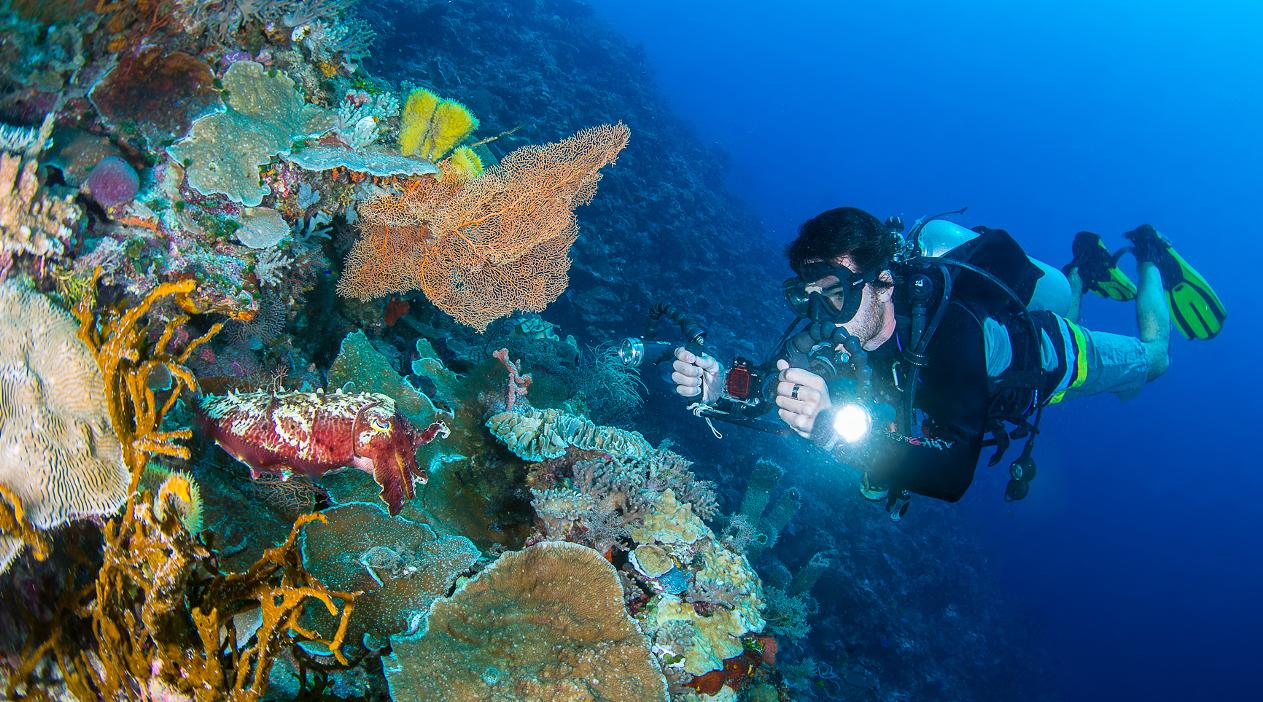 wisata indonesia bahasa inggris foto cumi-cumi di laut bebas asli dan nyata