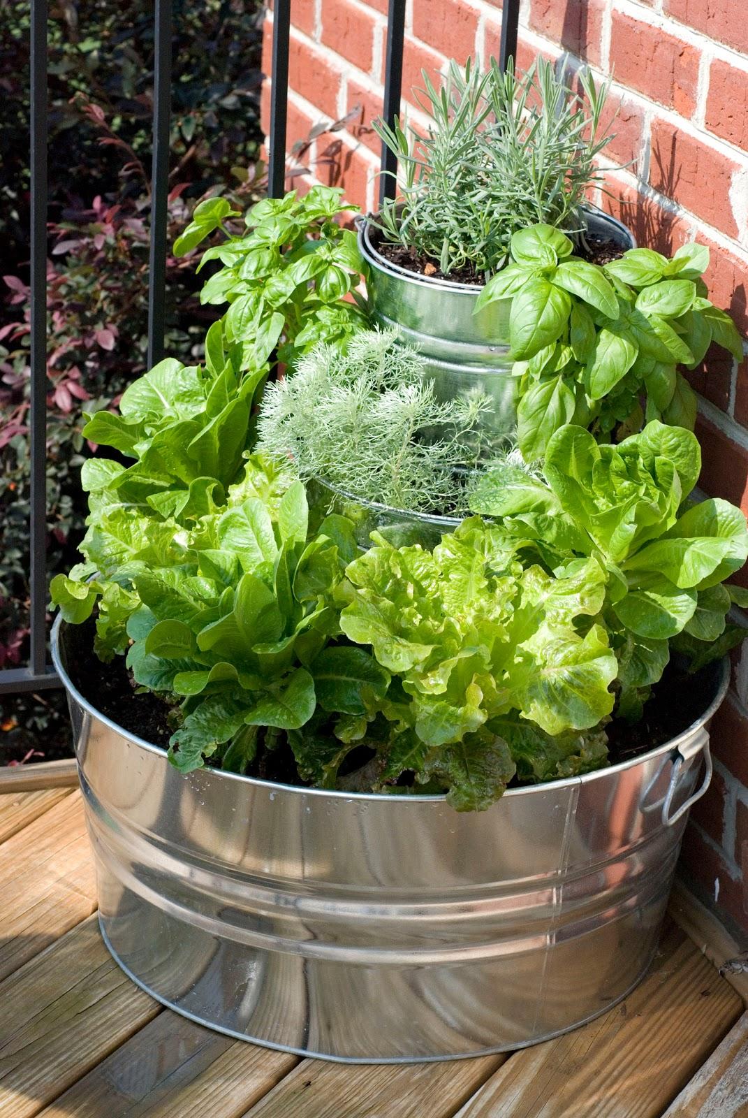 pictures of vintage herb gardens | { the vintage wren }: :: tiered lettuce & herb garden