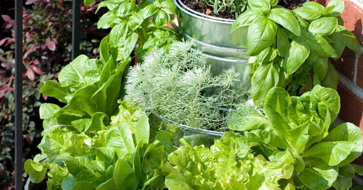 The Vintage Wren Tiered Lettuce Amp Herb Garden
