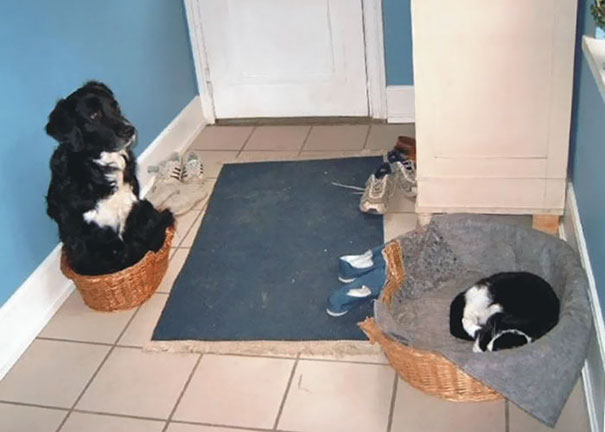 10+ Times Owners Wanted Cats And Dogs To Live Together, But It Didn't Work Out As Planned