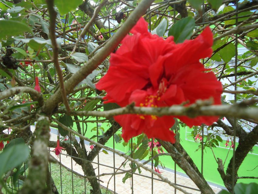 O Que Significa Ver Um Beija Flor Ou Receber A Visita Na Casa Do Beija Flor