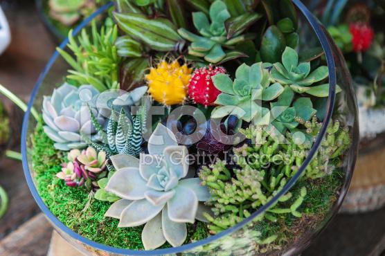 tanaman untuk terrarium di terrarium jakarta indonesia