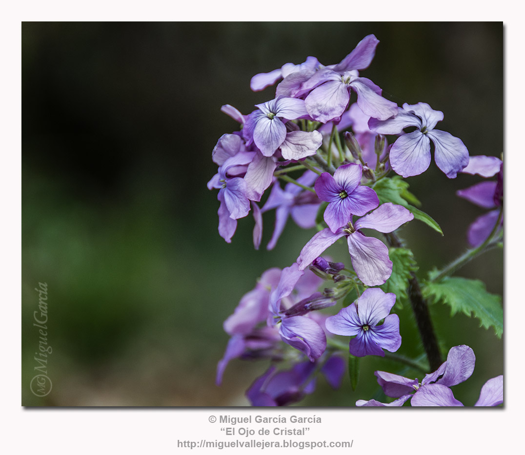 Flores de los Caminos