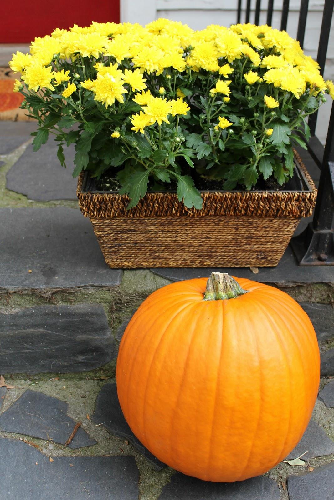 Ten June Pumpkins Gourds Fall Leaves Galore