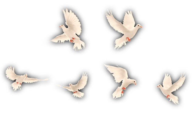 PigeonsAndTheHunter_KWStoryTimeKidsStory