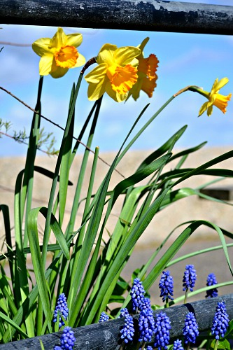Spring flowers on the river bank @ Ups & Downs, Smiles & Frowns