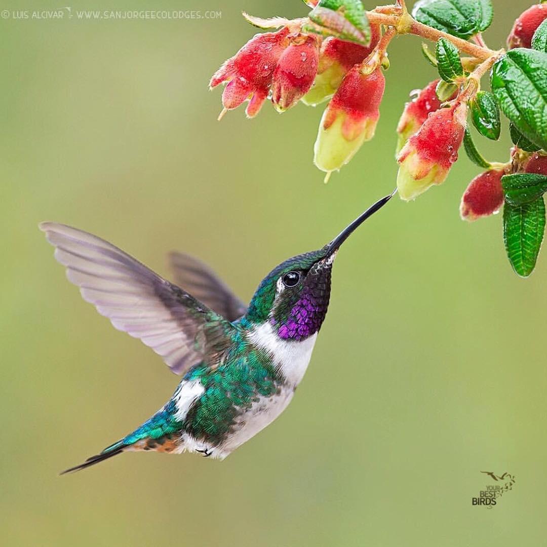 اروع الطيور ( 35 صورة )