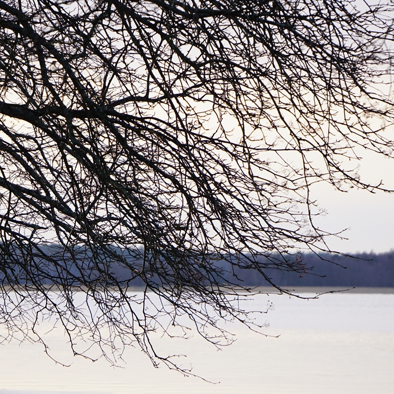 lehdetön puu, tammisaari