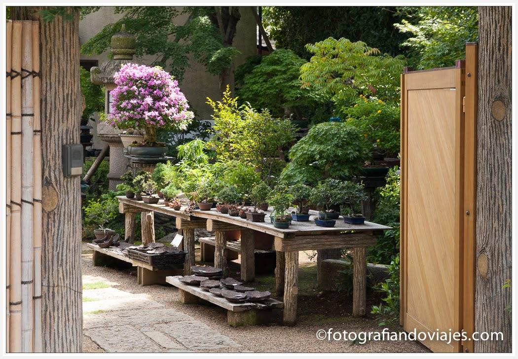 jardín de bonsais en Omiya