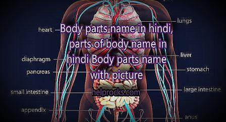 Body parts name in hindi, parts of body name in hindi- Body parts name with picture