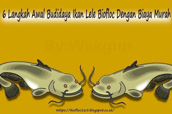 6 langkah awal budidaya ikan lele bioflok dengan biaya murah