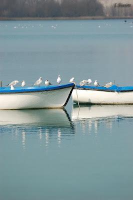 Gaviotas sobre distintas barcas