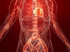 Struktur dan Fungsi sistem Peredaran darah Secara Lengkap