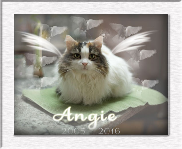 Angel Angie