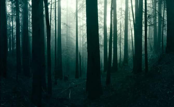 Terror, cine, árboles