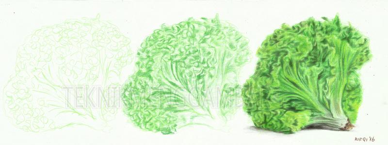 Cara Menggambar Sayuran Dengan Hasil Seperti Aslinya