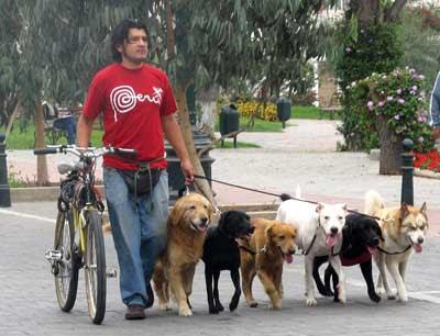 Conciencia y Responsabilidad para tratar a los perros
