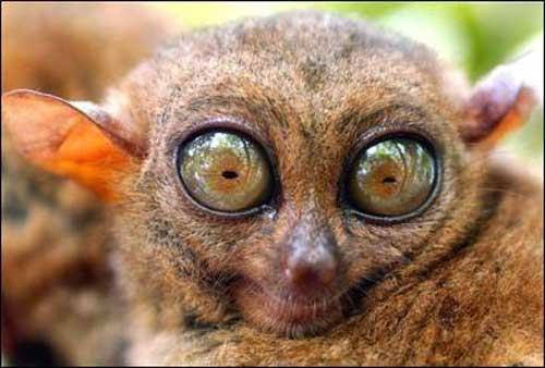 lemure.jpg.jpg