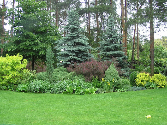 kompozycje w ogrodzie