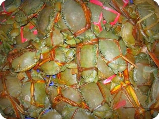 Karantina Bali Gagalkan Penyeludupan 160 Kepiting dari Timika yang Bertelur