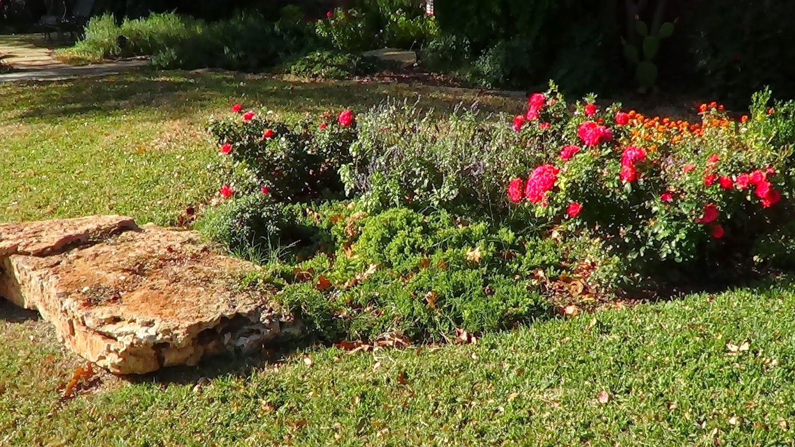 газон-цветы-на даче