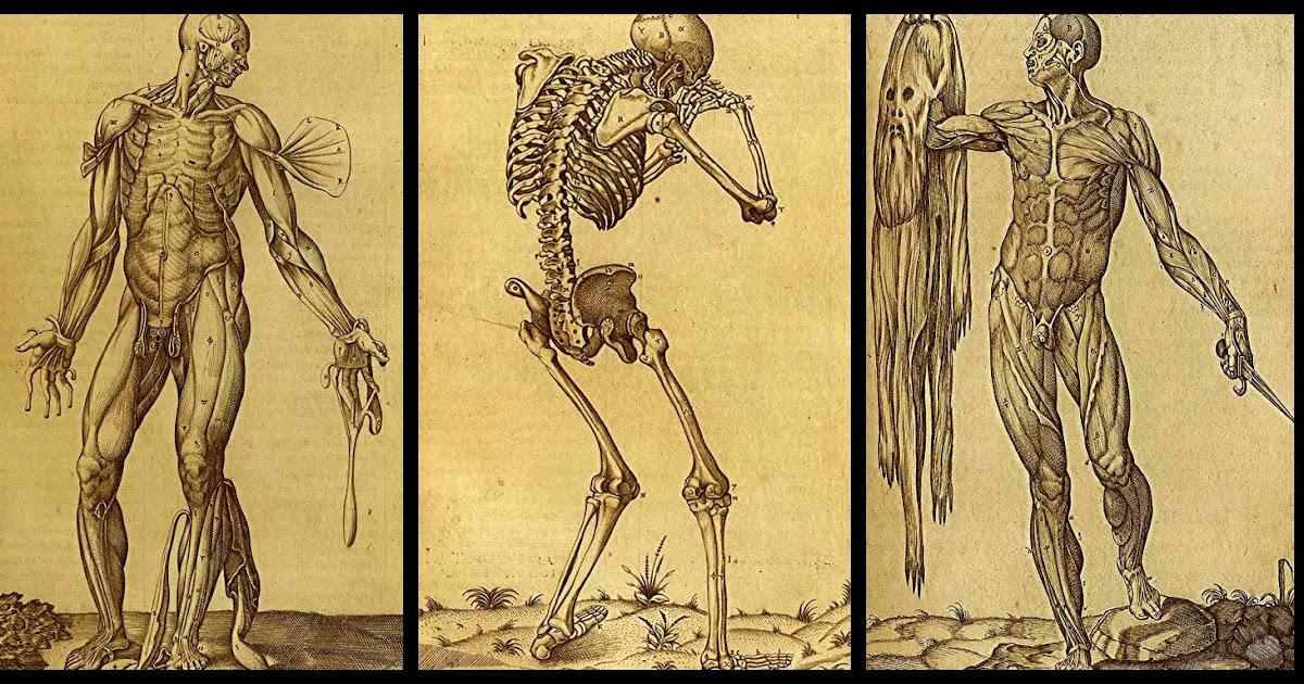 Anatomía Tipos De Anatomía