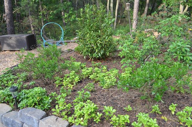 Smart Girls DIY weekly garden tour - woodland shade plants