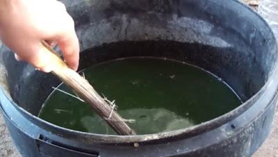 purin de ortigas