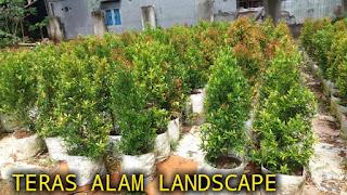 jual tanaman hias untuk taman cirebon