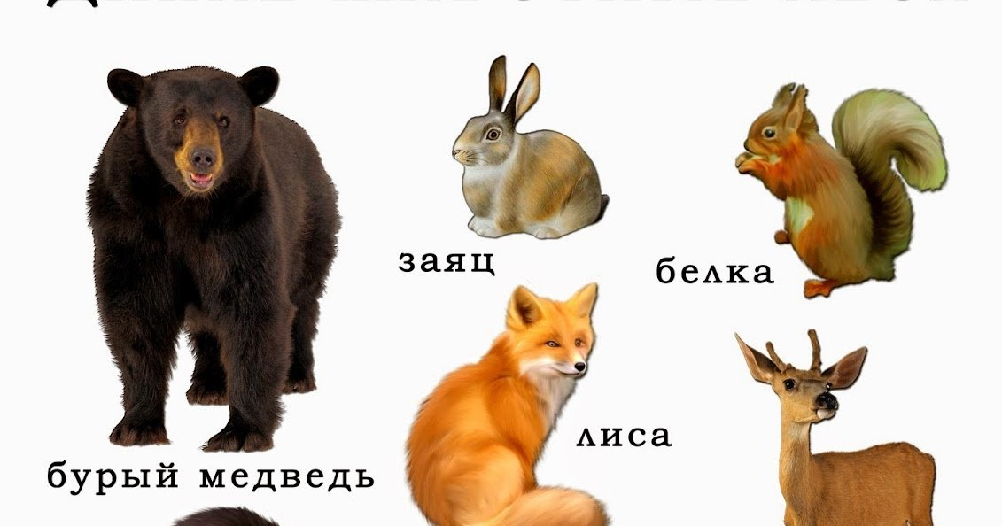 Анимашки февраля, картинки с изображением лисы медведя волка зайца совы и их детенышей