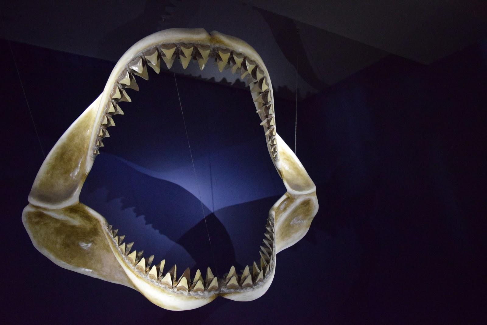 Shark Bones