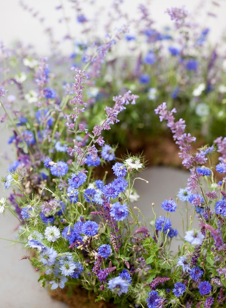 flores azules y moradas de Salvia, Nigella, Centaurea y Phacelia