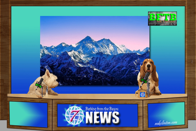 BFTB NETWoof News set with two dogs anchoring