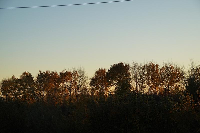 Abendhimmel Sonnenuntergang Hecke Goldener Oktober Herbst