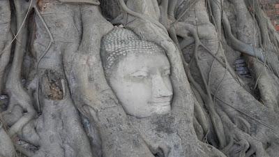 Ayutthaya testa nell'albero