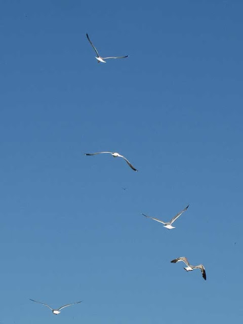 Gulls flying away in the sky of Livorno