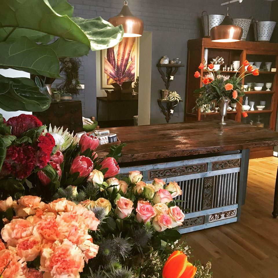danger garden: Mahonia: Portland\'s loss is Louisville\'s gain