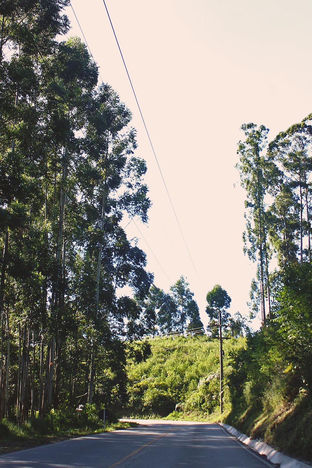 foto estrada floresta
