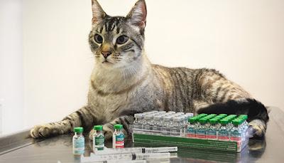 Vaksin Pada Kucing Kesayangan