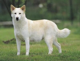 Resultado de imagen de fotos de perros blancos