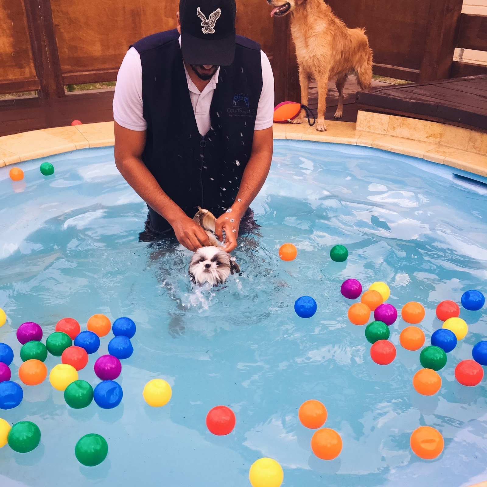 The Doggy Pool Party - Life in Excess Blog
