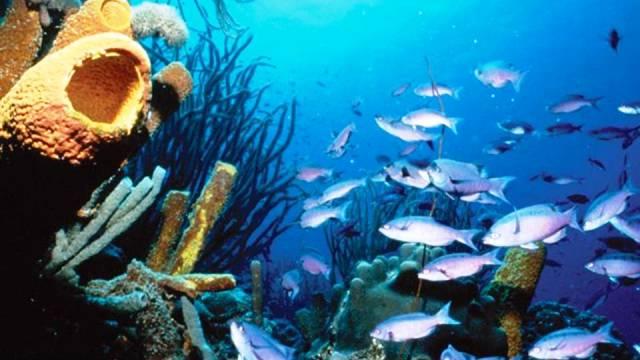 ท่องเที่ยว, แนวหินปะการัง, มัลดีฟส์, สถานที่ดำน้ำ, สถานดำน้ำทั่วโลก, อันดับสถานที่ดำน้ำ, โบแนร์ เนเธอร์แลนด์ แอนทิลลิส (Bonaire, Netherlands Antilles)