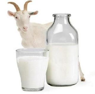 Manfaat Susu Kambing untuk Kulit dan Kecantikan