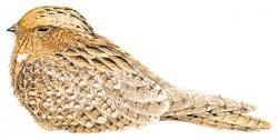 Caprimulgus centralasicus