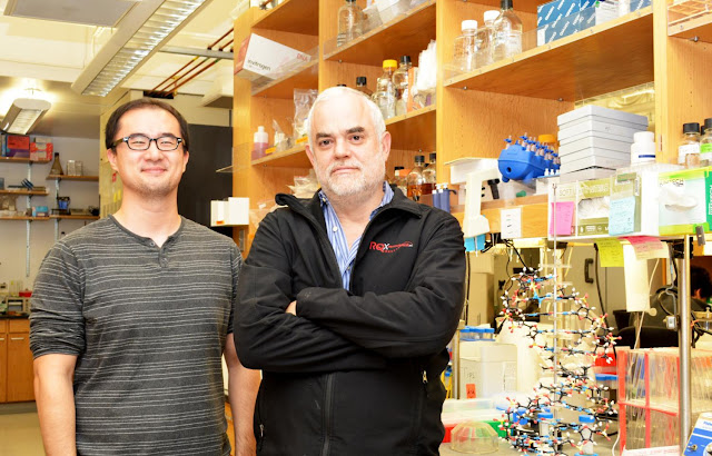 Scientists create first stable semisynthetic organism