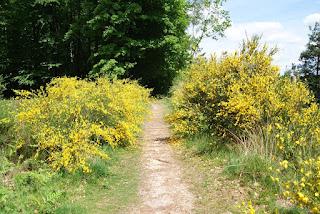 """Ein """"Tor"""" aus Büschen, an denen gelbe Blüten wachsen"""