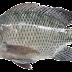 Jual Ikan Segar (Hidup) dan Olahan. Saat ini tersedia Ikan Nila, Ikan Gurami dan Lele