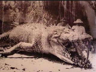 Cocodrilo gigante Krys cazado en Australia en 1958