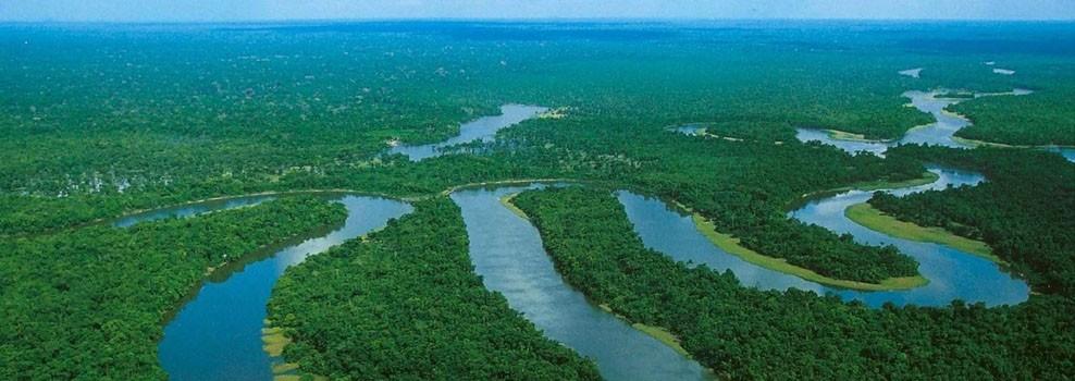 Floresta Amazônica, Selva Amazônica, Floresta Equatorial da Amazônia, Floresta Pluvial ou Hileia Amazônica